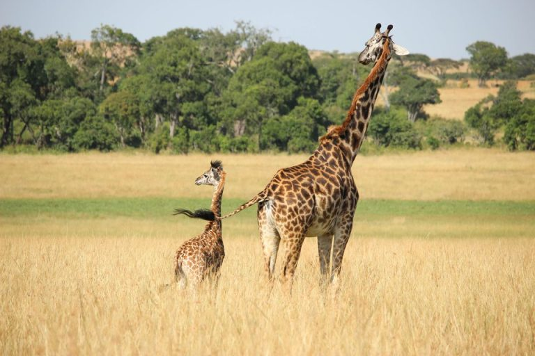 Flights from Los Angeles, USA to Nairobi, Kenya from only $732 roundtrip